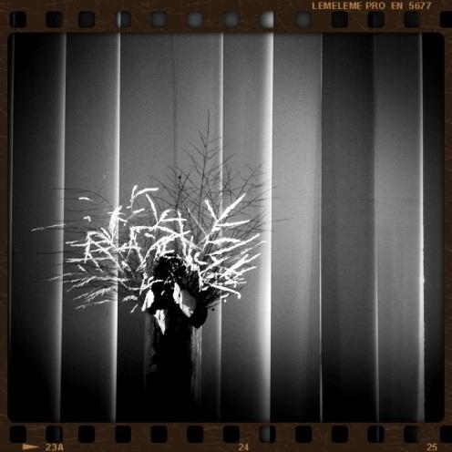 20110603-091036.jpg